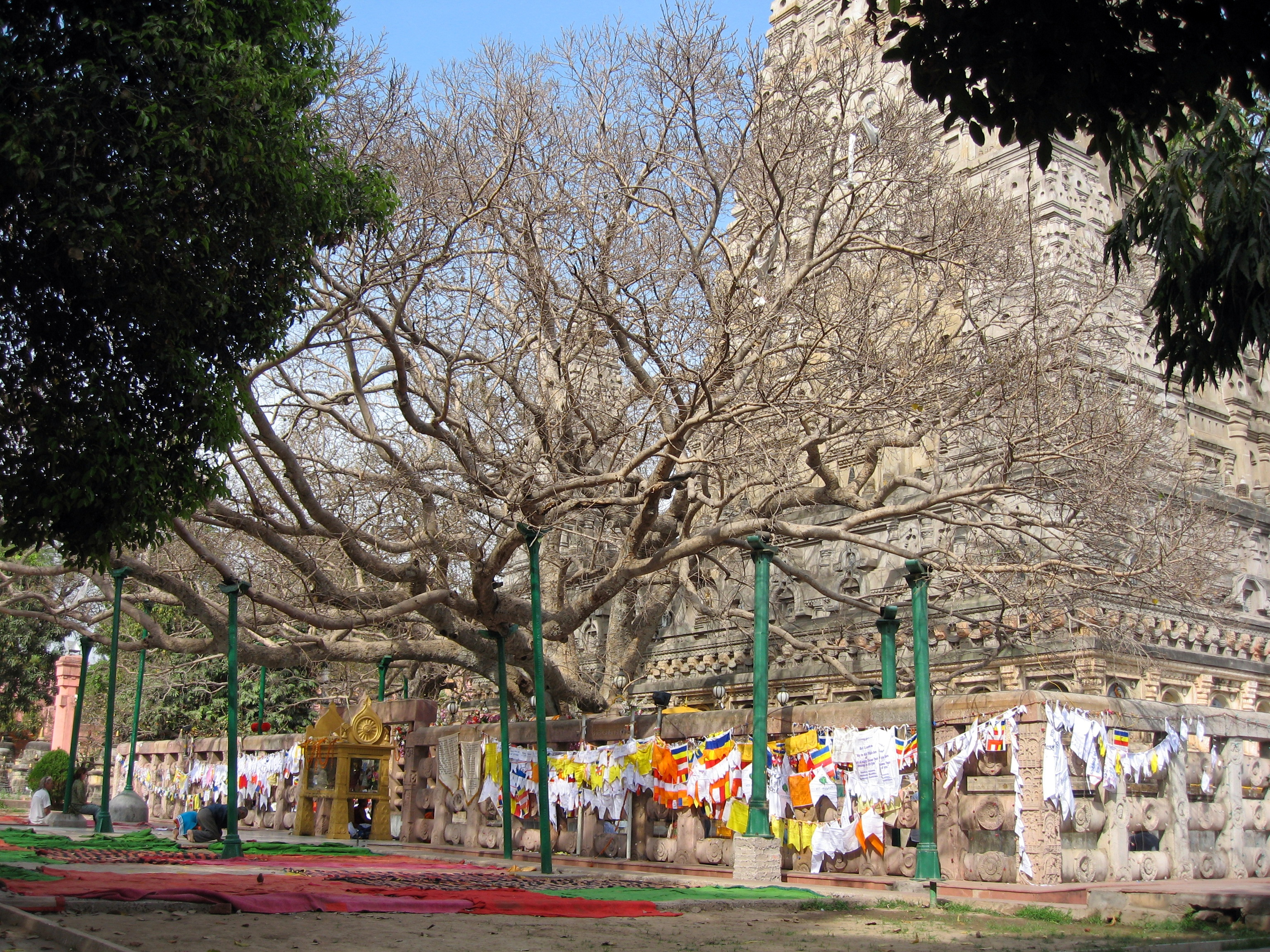 The holy Bodhi Tree in front of the Mahabodhi Temple, Bodhgaya, Bihar, India, view from southwest